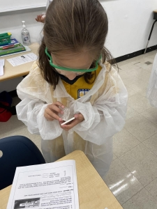 4th grade scientists working hard to uncover the properties of minerals